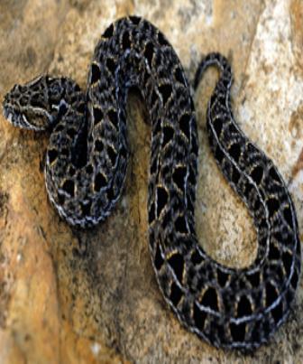 O veneno das serpentes é uma secreção tóxica