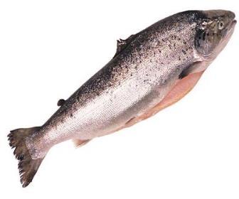 Os peixes podem ser descongelados no refrigerador.