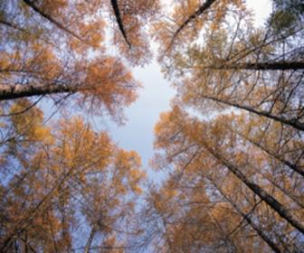 Gestão florestal no Brasil: Instrumentos de política pública