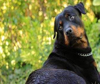Neoplasias gastrintestinais em cães e gatos