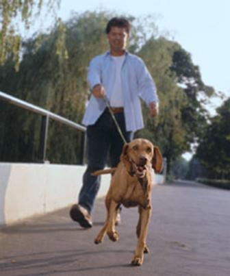 No hermafroditismo o cão possui as duas gônadas: a feminina e a masculina