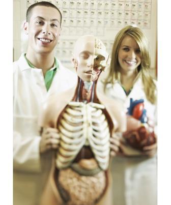 Anatomia Humana em 3D