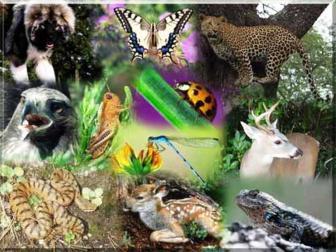 Subdivisões da biologia