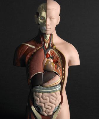 O corpo do cadáver rompe