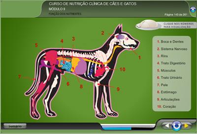 Curso Nutrição Clínica de Cães e Gatos