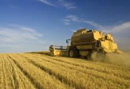 Pós-graduação em Gerenciamento Agroindústrial - Especialização lato sensu