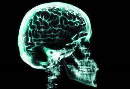 Neuroanatomia