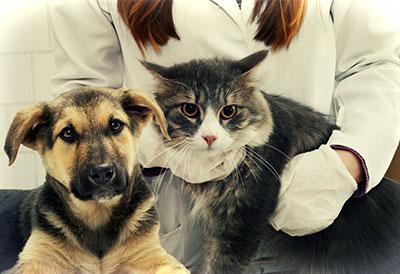 Nutrição Clínica de Cães e Gatos
