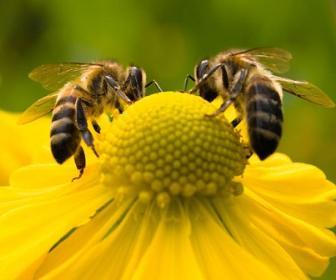 Cidades podem salvar os insetos polinizadores
