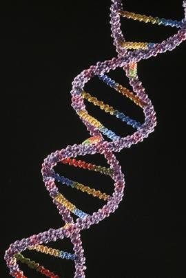 A replicação do DNA ocorre de forma semiconservativa