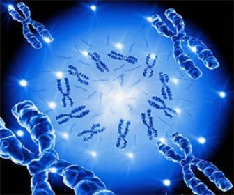 A Genética é o ramo da biologia que estuda as leis da transmissão dos caracteres
