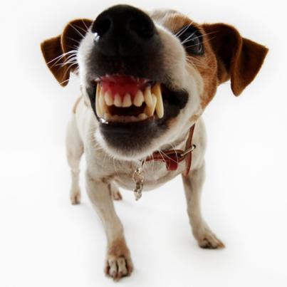 A fenda palatina na odontologia veterinária