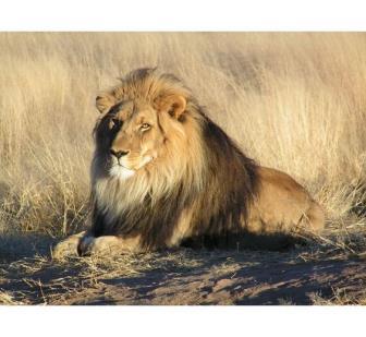 Estátuas de leões alertam para a extinção da espécie em Nairóbi