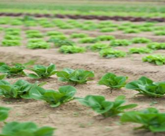 Pesticidas, Herbicidas e Agrotóxicos no contexto da agricultura