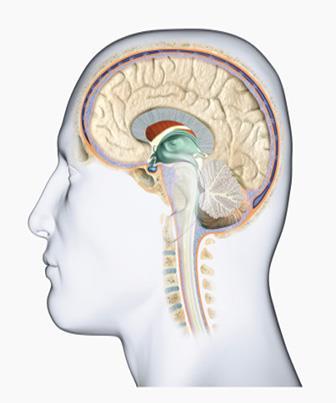 Assistência de Enfermagem ao Paciente com Traumatismo Cranioencefálico