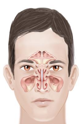 Fisioterapia respiratória em paciente hospitalizado com derrame pleural