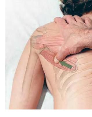 Testes Especiais em Fisioterapia de membros superiores e inferiores