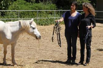 Terapia com cavalos e seus benefícios