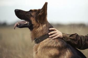 Centro de Treinamento para cão-guia será lançado pela USP