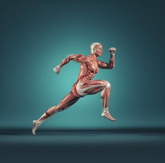 A Fisiologia e o Mecanismo da Contração Muscular