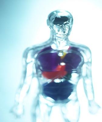 Posição anatômica do corpo humano