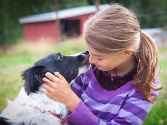 Adotar um animal exige responsabilidade