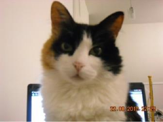 Doenças relacionadas à deficiência de taurina em gato doméstico