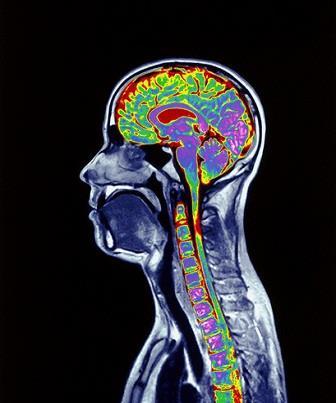 Neurônios e suas funções