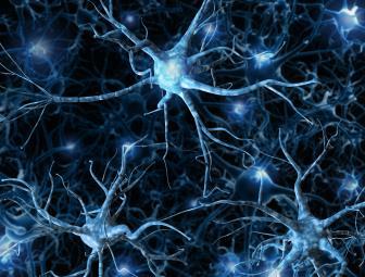 Sistemas Nervosos (SN): Simpático e Parassimpático