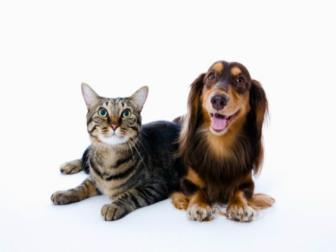 Bem-estar, Proteção Animal e Legislação podem ser estudados pela internet