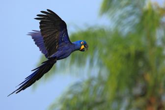 Pantanal terá operação
