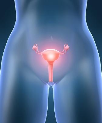 Estruturas internas e externas que formam o aparelho reprodutor feminino