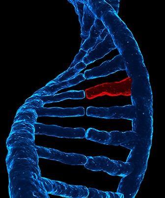 Transcrição, tradução e replicação do Ácido Nucleico Viral