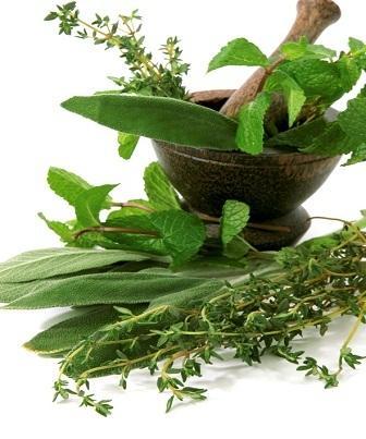 As ervas podem ser utilizadas na alimentação na sua forma fresca