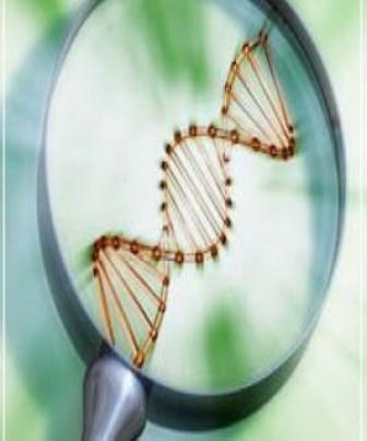 Endogamia para Melhoramento Genético Animal