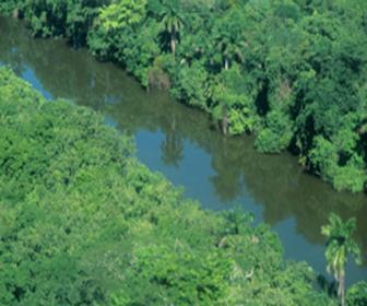 O consumismo e seus impactos ambientais