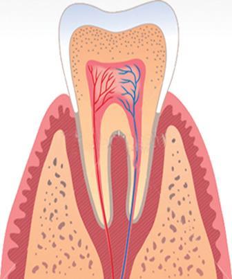 Entendendo a Endodontia