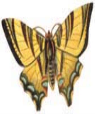 Os tipos de antenas dos insetos