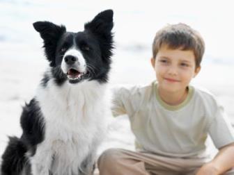Protetor solar para animal é essencial no verão ou em dias quentes