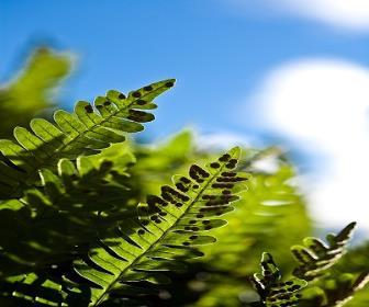 Existem dois tipos de cultivos: o de plantas exóticas e o de plantas nativas brasileiras.