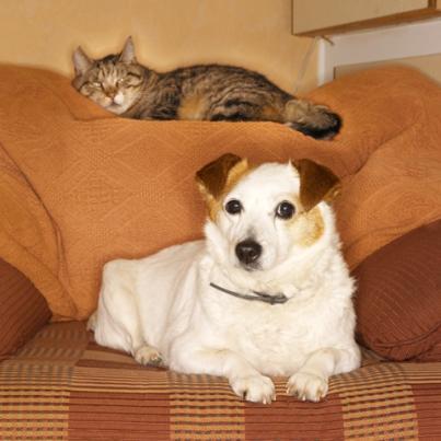 Vida e grupo social dos animais