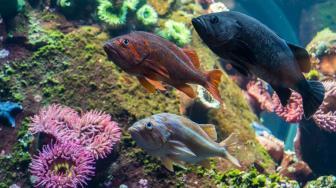 O peixe-cego e um novo olhar sobre o processo evolutivo
