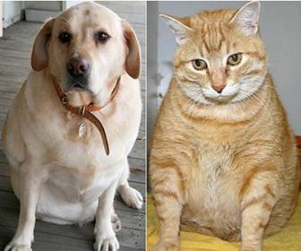 Grandes vasos e circulação periférica abdominal em cães e gatos
