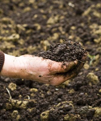 Os benefícios e limitações do processo de compostagem na Educação Ambiental