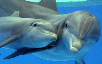 Ecolocalização: Ultrassonografias, morcegos e golfinhos
