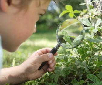 Curiosidade sobre o meio ambiente