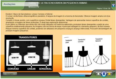 Curso Ultrassonografia em Pequenos Animais