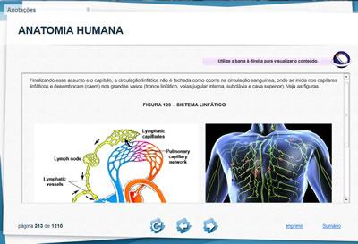Curso Anatomia Humana