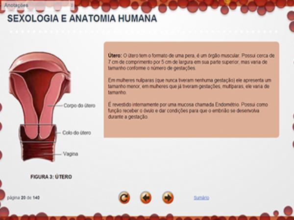 Curso Sexologia e Anatomia Humana