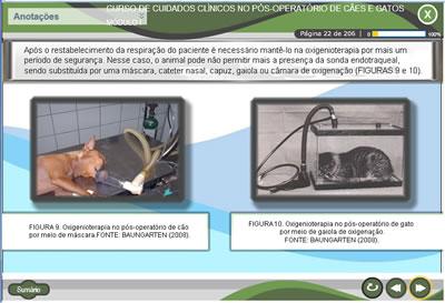 Curso Cuidados clínicos no pós-operatório de cães e gatos